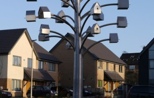 Frodsham Birdtree