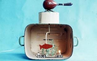 Gold Fish-Fish Gold