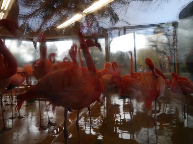 Flamingos Leipzig